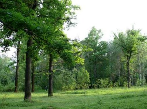 урок окружающего мира лес