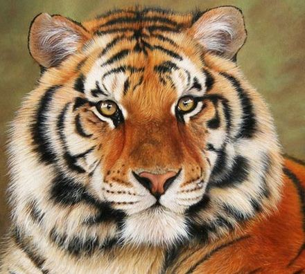 Редкие виды животных интернет проект ru амурский тигр