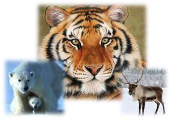 Редкие виды животных