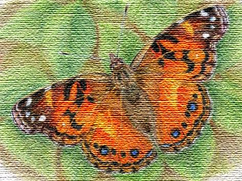 Бабочки. Детские стихи